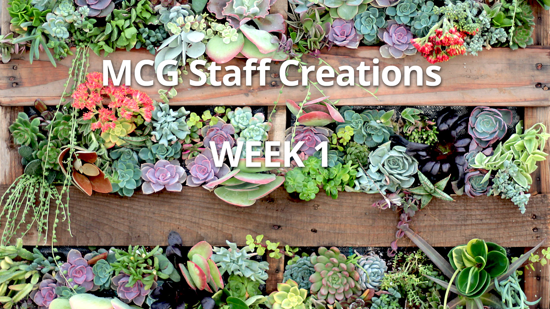 Diy Succulent Living Wall Using Wood Pallet Employee Creations Week 1 Mountain Crest Gardens