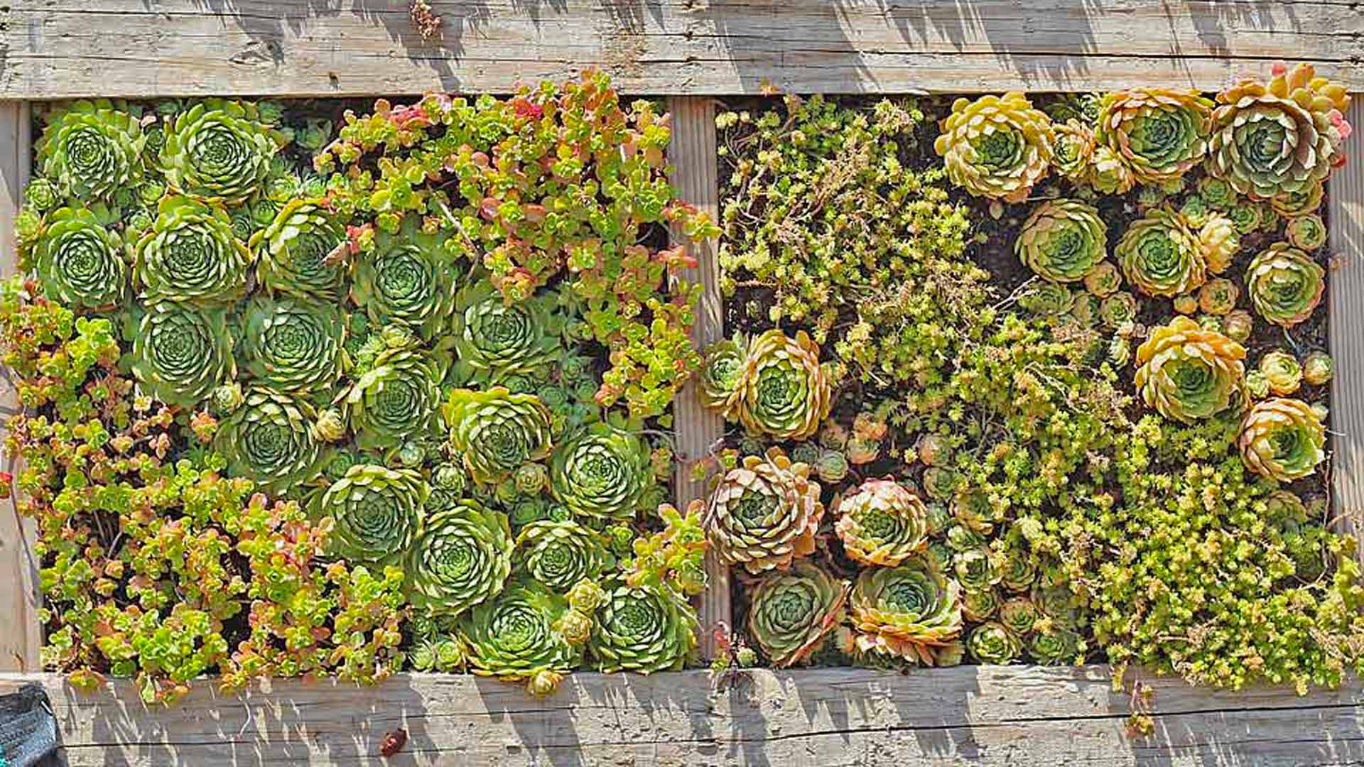 Diy Succulent Planter With Wooden Pallet Mountain Crest Gardens