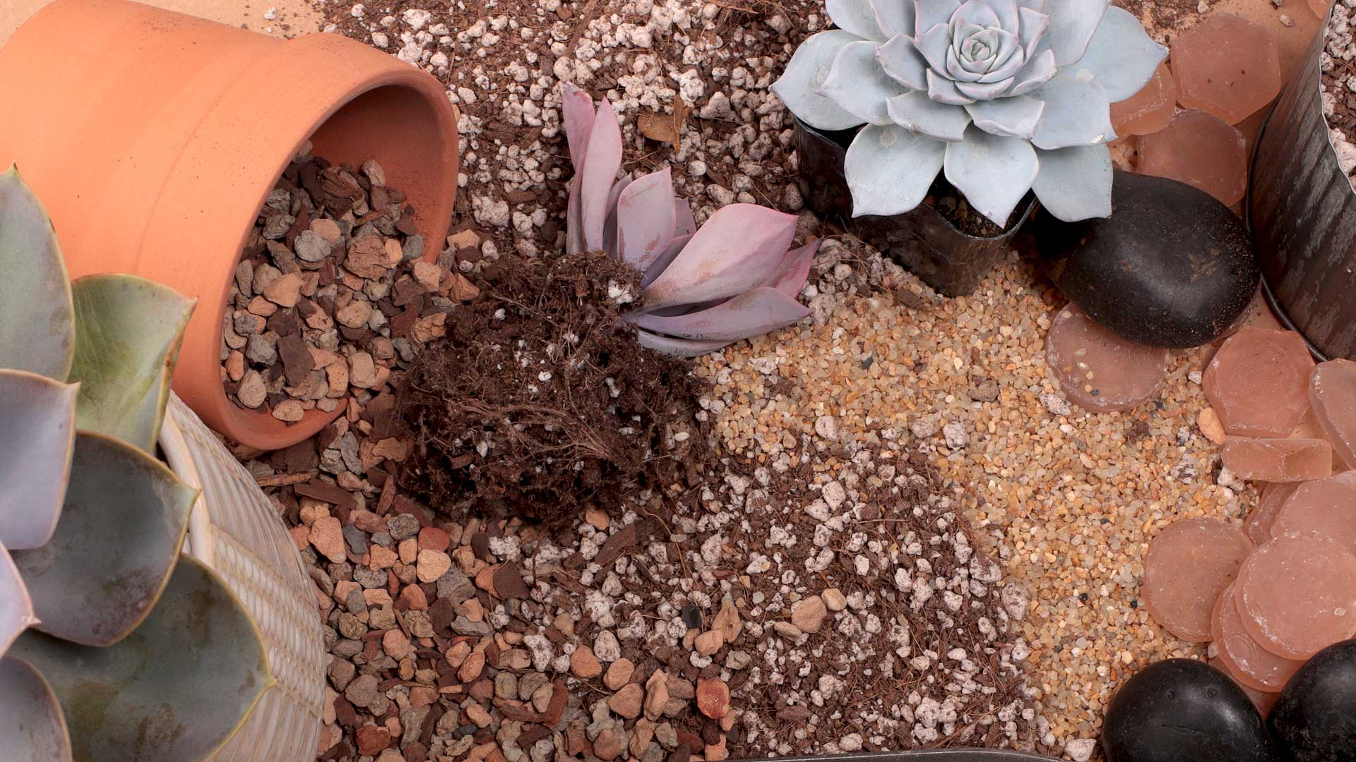 Succulent Soil The Ultimate Guide Mountain Crest Gardens