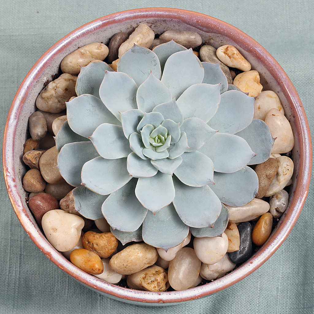 How Densely Should I Plant Space Succulents Mountain Crest Gardens