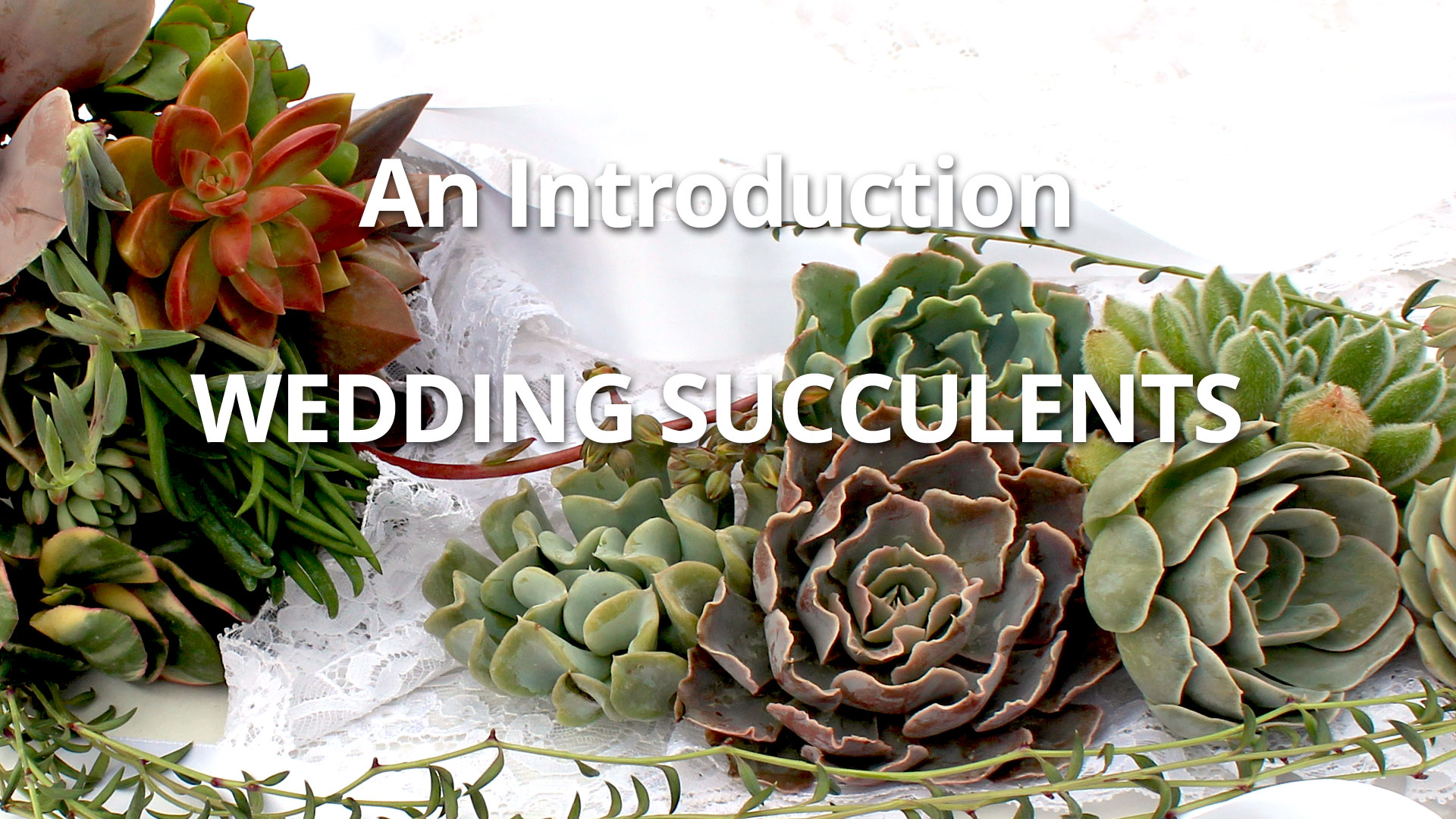 Wedding Succulents - An Introduction - Mountain Crest Gardens