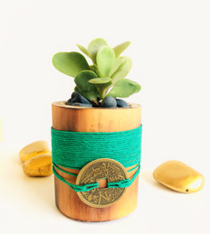 Money Plant in Green express  growth, vitality and abundance,