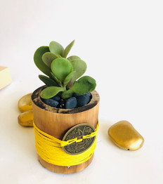 Money Plant in Yellow express Hope & Optimism
