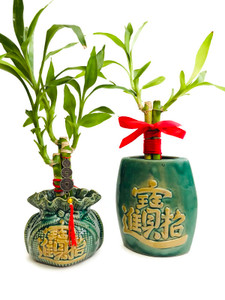 Bamboo Plant on Wealth Vases