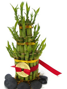 Lucky Bamboo 5 Tier