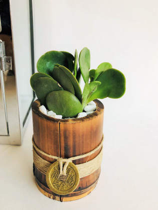 "Jade Plant ""The Money Magnet"""