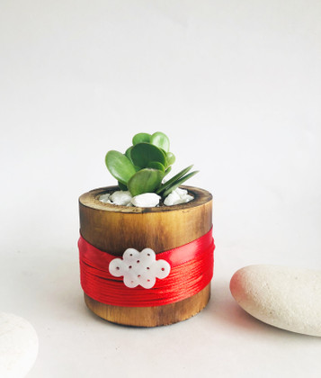 Jade Plant with Jade Infinity Lucky Knot