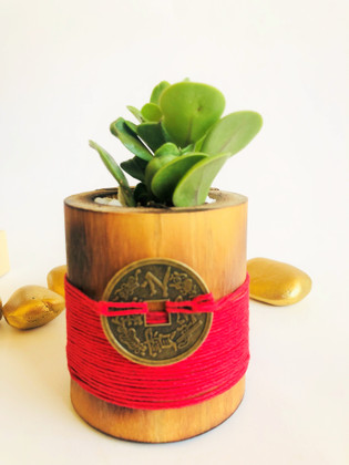 Money Plant in Red  signify Luck,  Energy & Determination