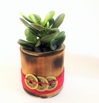 Feng Shui Money Plant