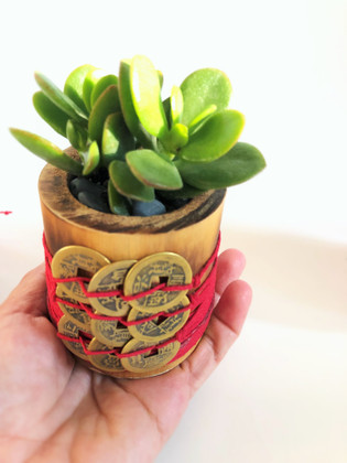 9 Coins Money Plant