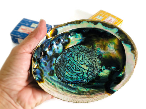 """7"""" Abalone Shell + 36 Incense Cones"""