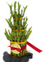 Fortune Bamboo 2 Tier for Basements