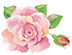 350-small-pink-rose.png