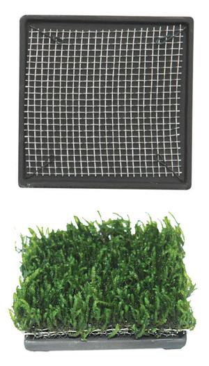 Cultivation Ceramic Plate (6.5x6.5cm)