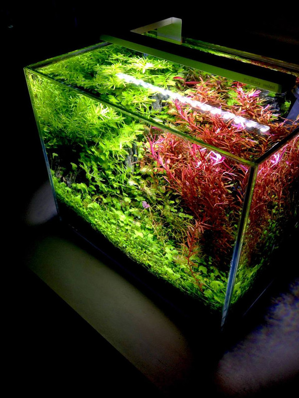 FLEXI-mini HCRI LED SP