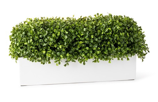 Boxwood Rectangle Planter