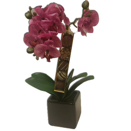 Orchid and Chocolate Arrangement (Assorted Colored Florals)