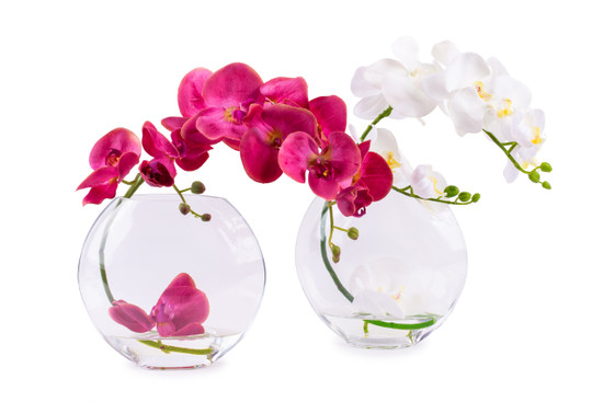 Orchids in Glass Oval Vase