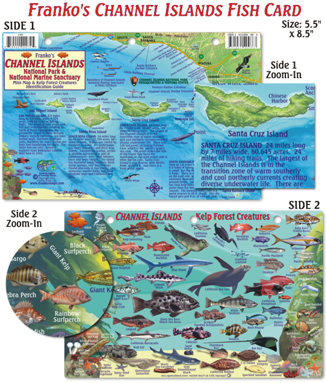 Channel Islands Mini Map & Kelp Forest Creatures (fish card) - Mail ...