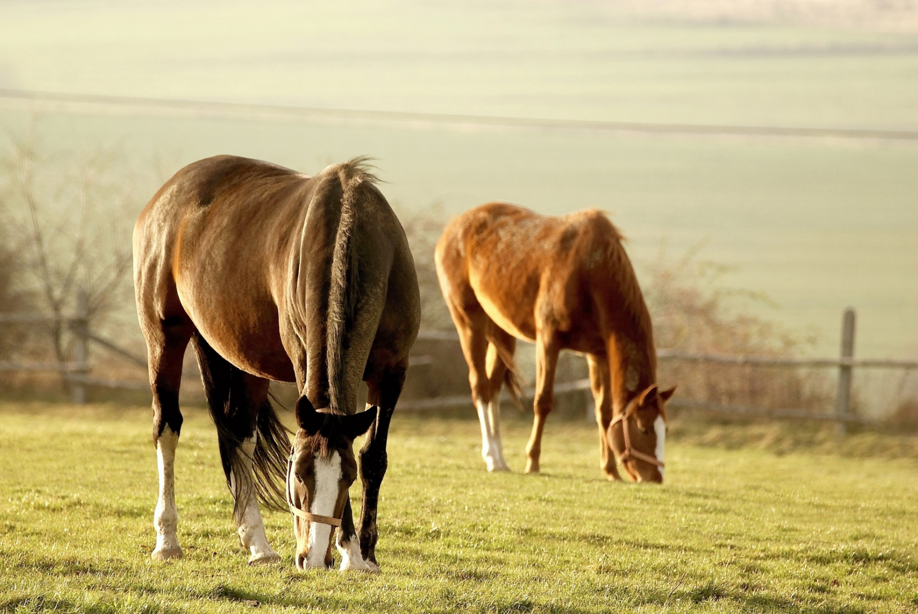 Two horses grazing in a scenic pasture.