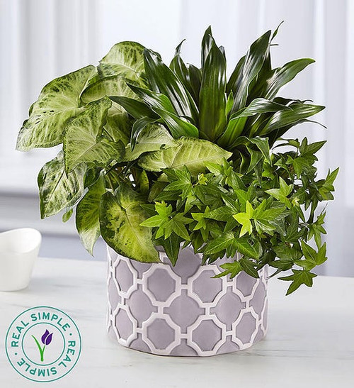 Real Simple® Dish Garden for Sympathy