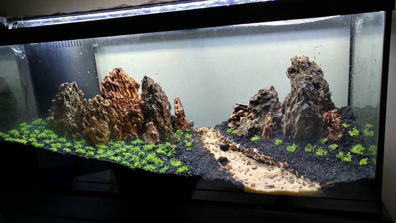 Manzanita Driftwood Com Stunning Aquarium Driftwood Stones Fish