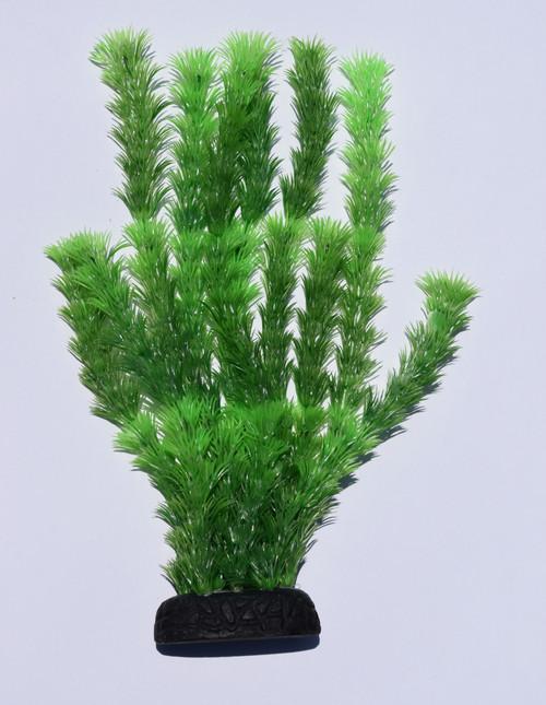 """8"""" Green Hornwort"""