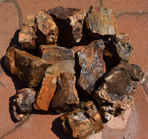 10lb Petrified Wood 2