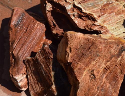 20lb Red Petrified Wood