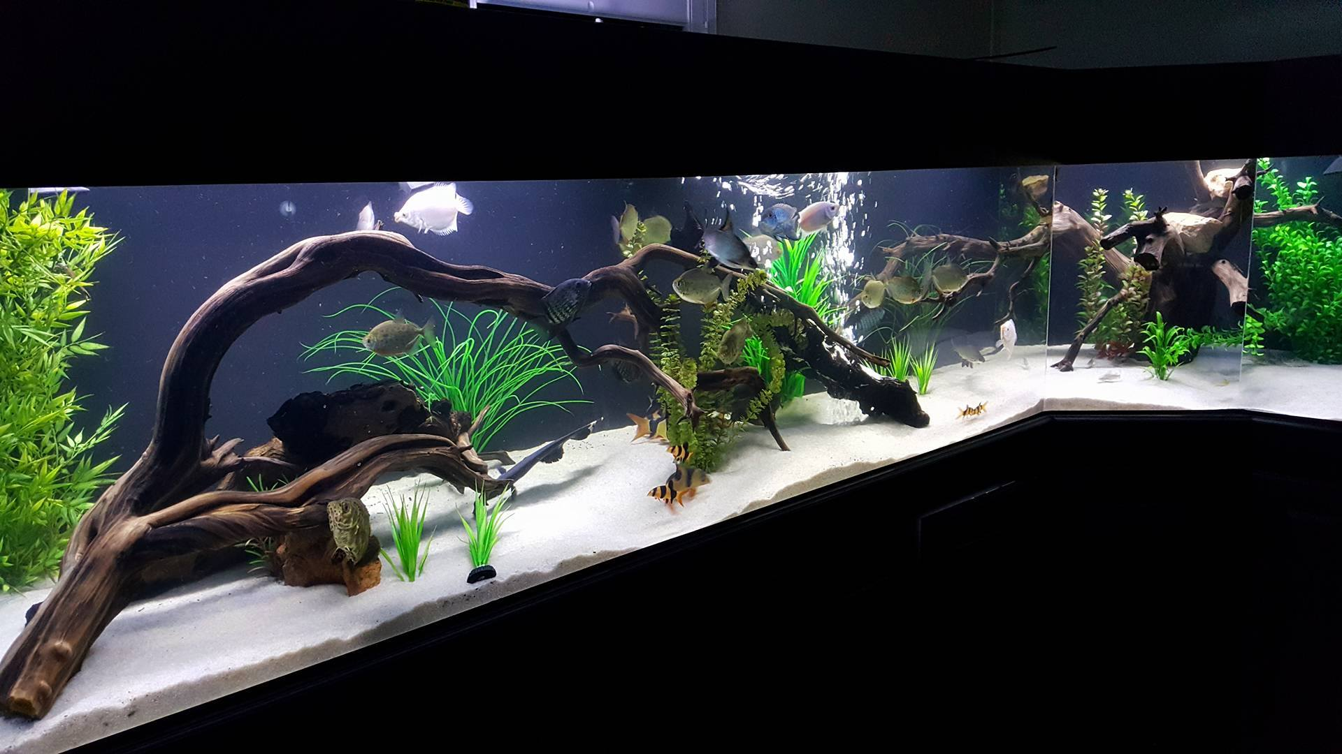 Manzanita-Driftwood com - Stunning Aquarium Driftwood, Stones, & Fish