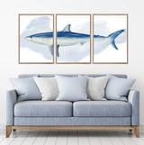 Mako Shark Watercolour Set Of 3 Wall Art Home Decor Picture Framed Prints