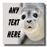 Gorgeous Seal Coaster