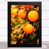Close Up Oranges Home Wall Art Print