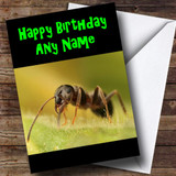 Ant Customised Birthday Card