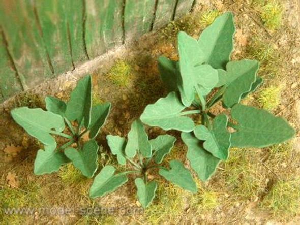 Burdock Plants