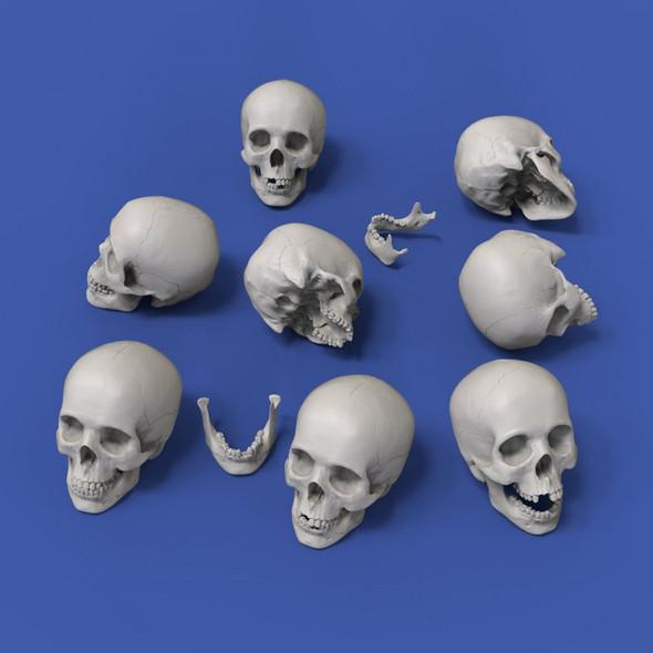 Skulls 54mm