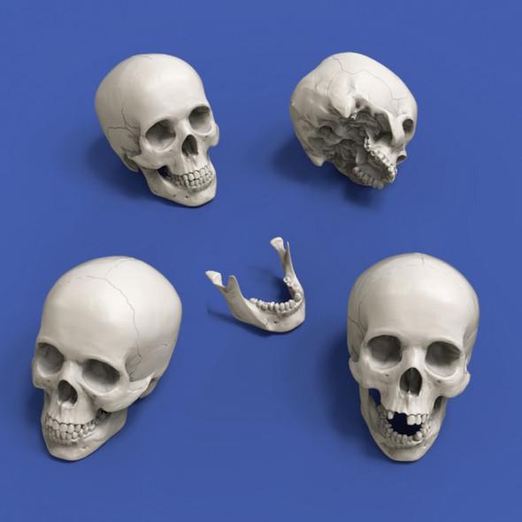 Skulls 90mm