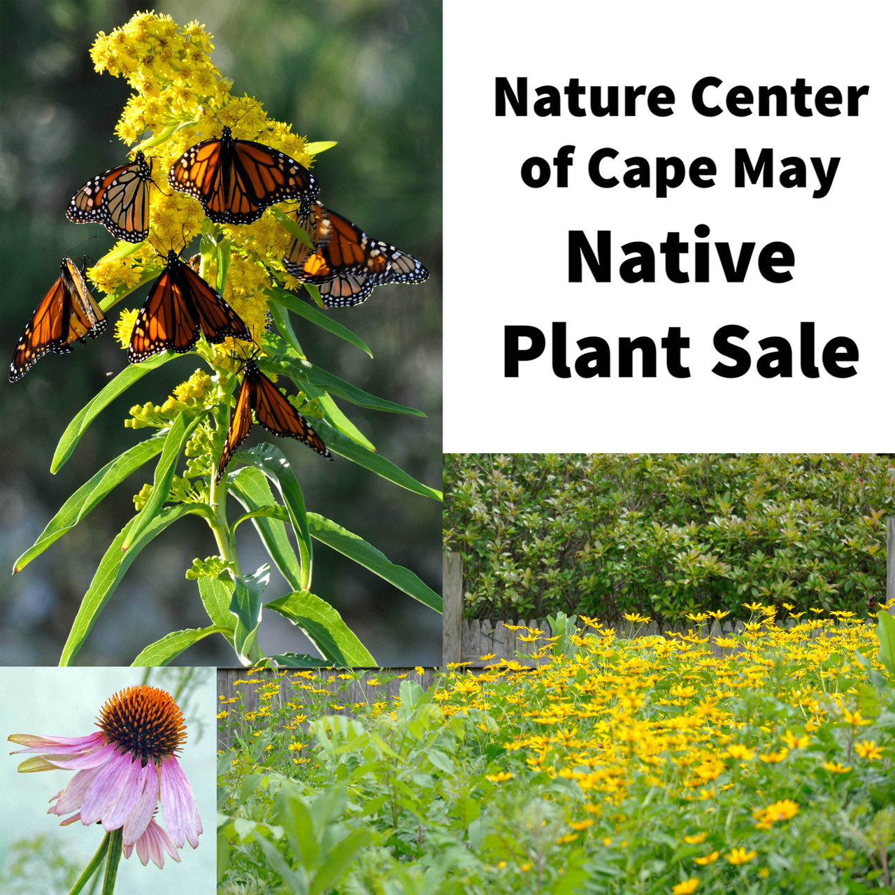 Nature Center of Cape May