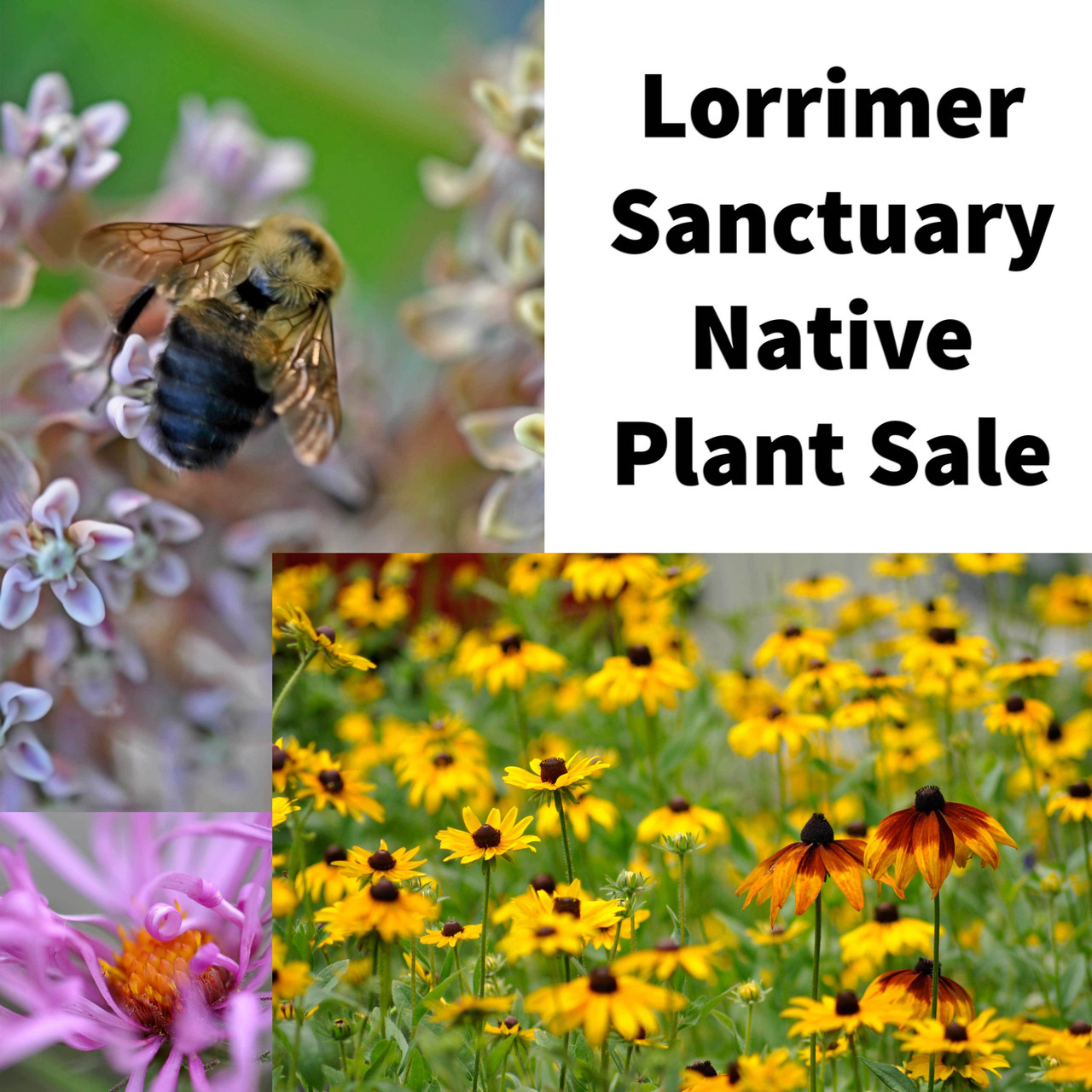 Lorrimer Sanctuary