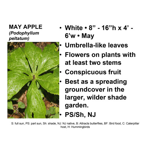 Mayapple-gallon, SH
