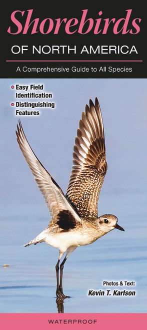 Shorebirds of North America laminated folding id guide