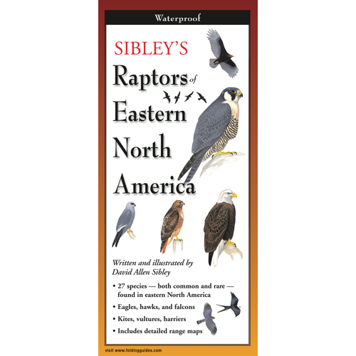 Sibley's Raptors of Eastern North America laminated FoldingGuides™