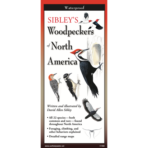 Sibley's Woodpeckers of North America laminated FoldingGuides™