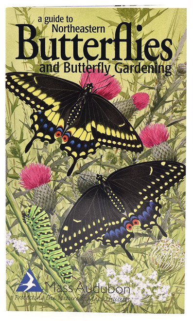 A Guide to Northeastern Butterflies and Butterfly Gardening