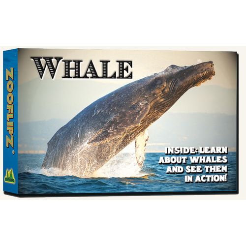 Animal Flipbooks (Whale)