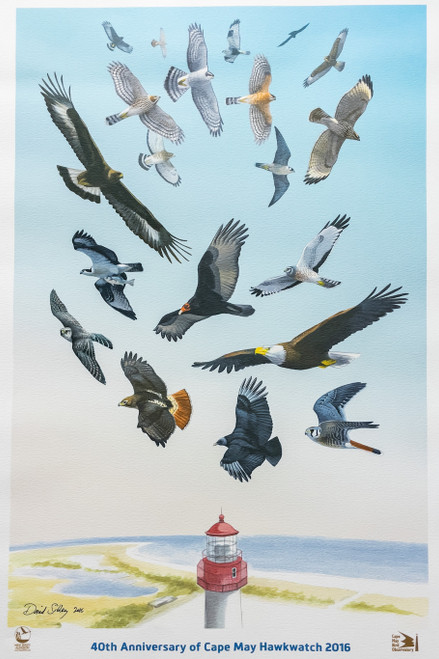 40th Anniv. Cape May Hawkwatch, Giclee