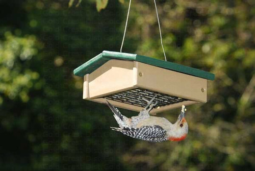 Songbird Essentials- Small Upside Down Suet Feeder