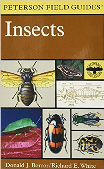 Field Guide to Insects: America North of Mexico