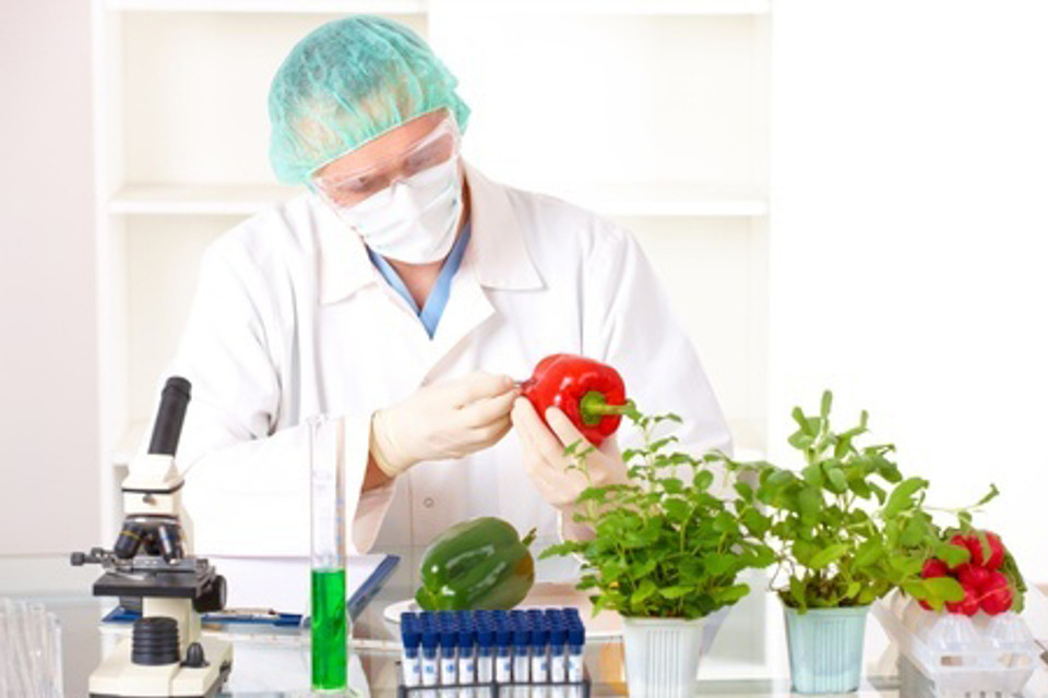 Can Genetically Modified Food Destroy Gut Bacteria?