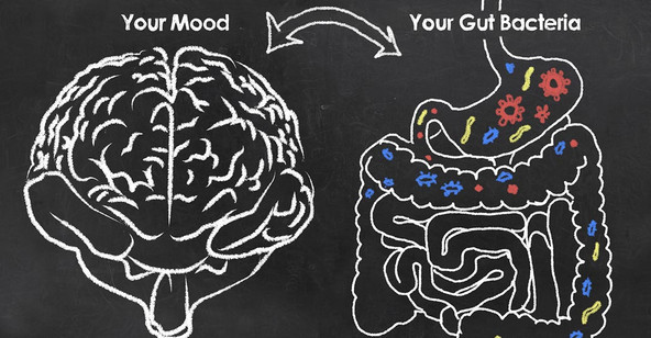 Probiotics, Stress, and Anxiety